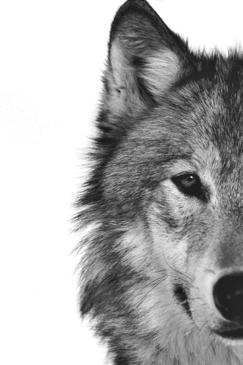 tumblr miiua50CG51s6omwxo1 500 large Fur.