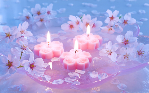 Candles-wallpaper-flowers-japanese-cherry-widescreen_large