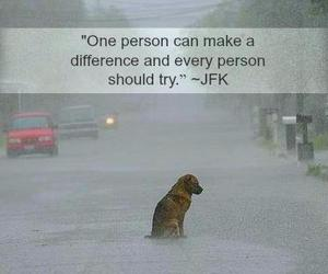adopt instantly