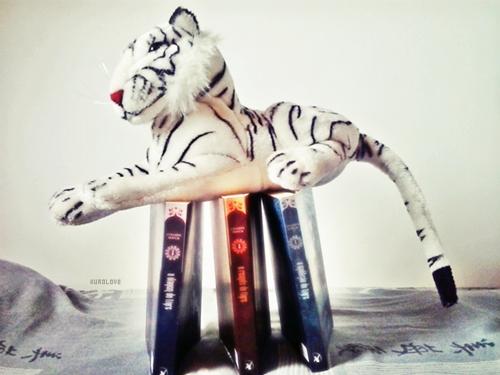 (23) a viagem do tigre | Tumblr