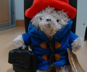 paddington bear peludo