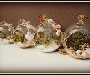 terrrariums airplant