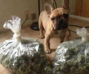 weed doggy adorable awh
