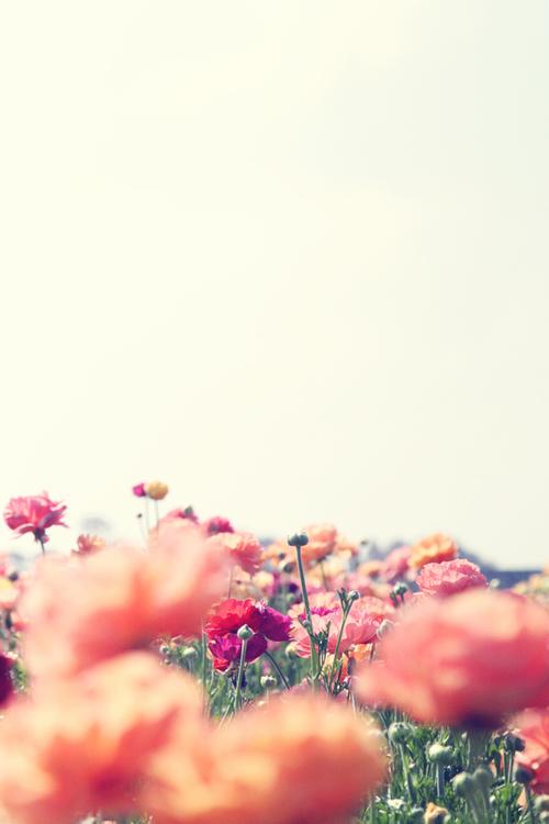 Color-colorful-cute-flower-favim.com-642323_large