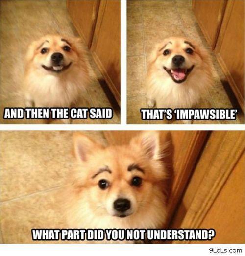 Funny Dog Jokeslarge