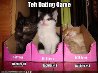 games kitten date
