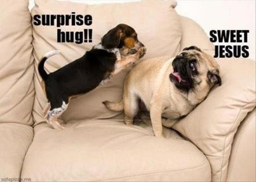 Funny-dogs-surprise-hugs_large