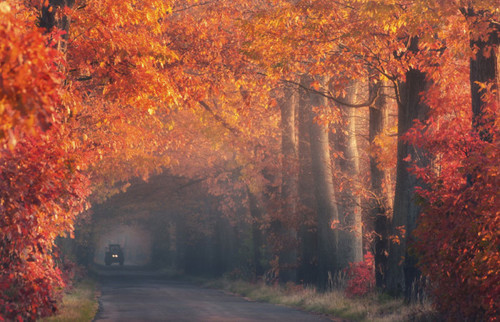 Autumn-with-tractor_large