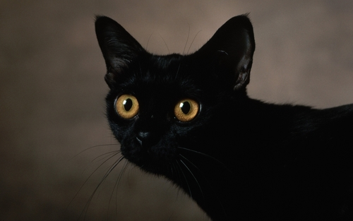 cat dark eyes face 40067 2560x1600 large Bright Eyes