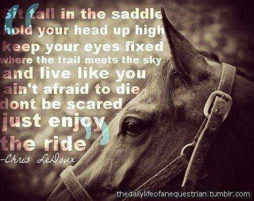 Horse Pictures With Quotes 81999-horse+pictures+with+