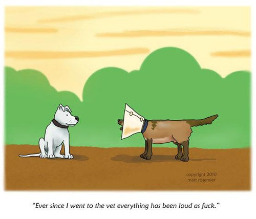 Comic Pictures of Dogs Group of Funny Dog Cone Comic