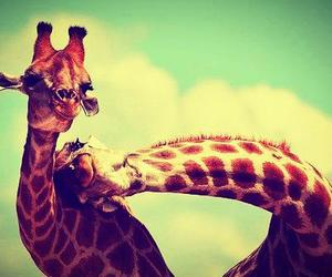 giraffe | via Facebook