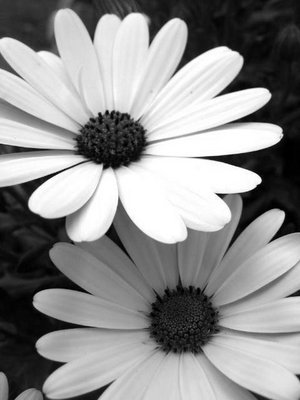 Images black and white flowers black and white flower source weheartit mightylinksfo