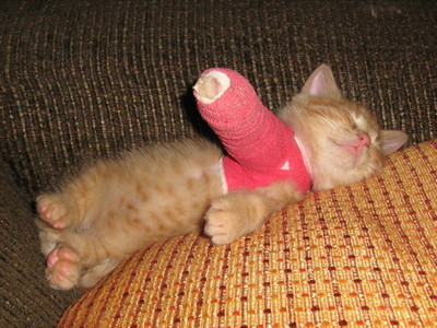 Kitten-in-cast_large