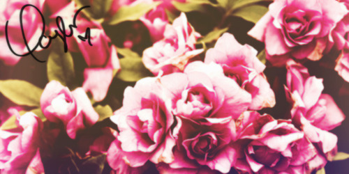 Twitter Headers Black Flowers | www.pixshark.com - Images ...