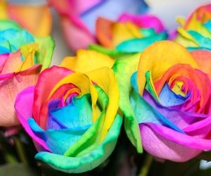 Rainbow Colored Roses - OGQ Backgrounds HD