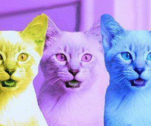 cats color psicodelic