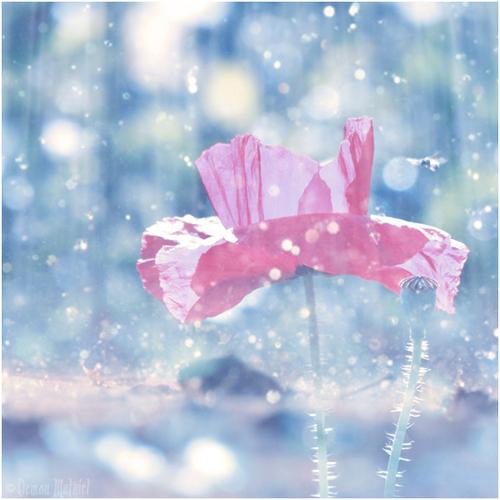 Spring_bath_by_demonmathiel_large