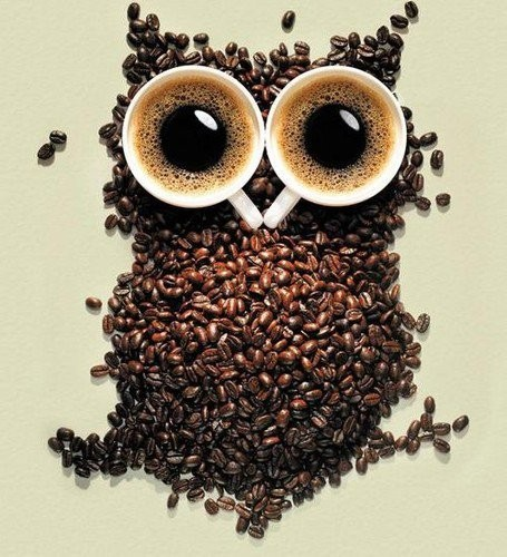 Bird,coffee,owl,creative-8dafcbadcf6df1df18039f9f4507c283_h_large