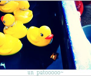 duck water pato