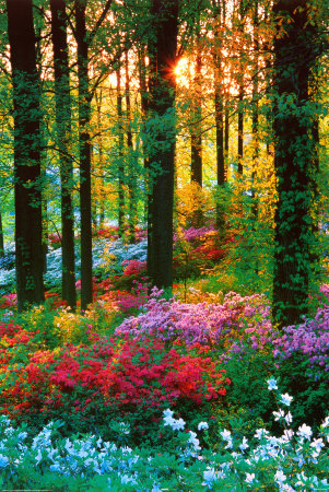 Flower-forest_large