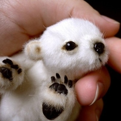 The-tiniest-polar-bear-315-1294974841-1_large