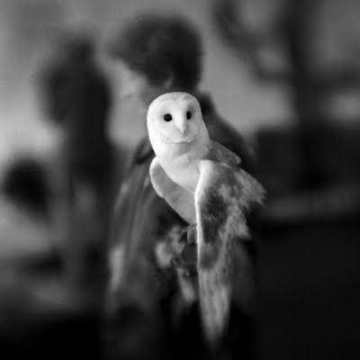 White+owl2004_large