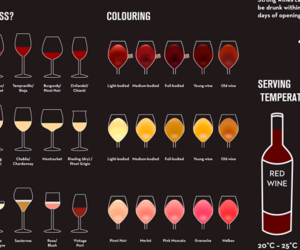 wine infographic drink