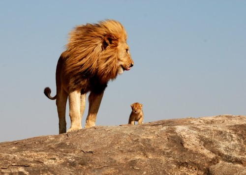 One-day-simba-all-of-this-will-be-yours-540x385_large