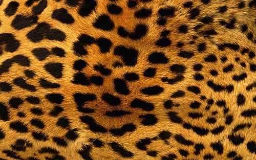 Leopard-skin-pattern-backgrounds-pictures_large
