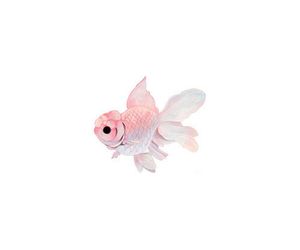 fish love pink cute