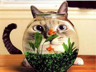 http://data.whicdn.com/images/8211233/funny-cat-looking-through-fish-tank_large.jpeg?1301062928
