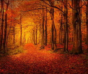 beautiful nature forest