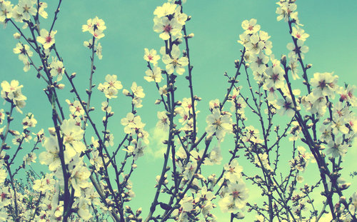 Spring__by_hqheart-d3cj4ag_large