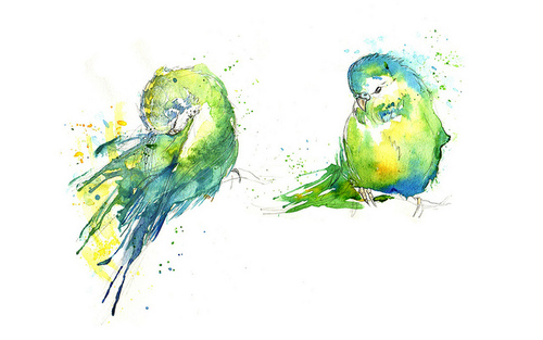 Budgies IV | Flickr - Photo Sharing!