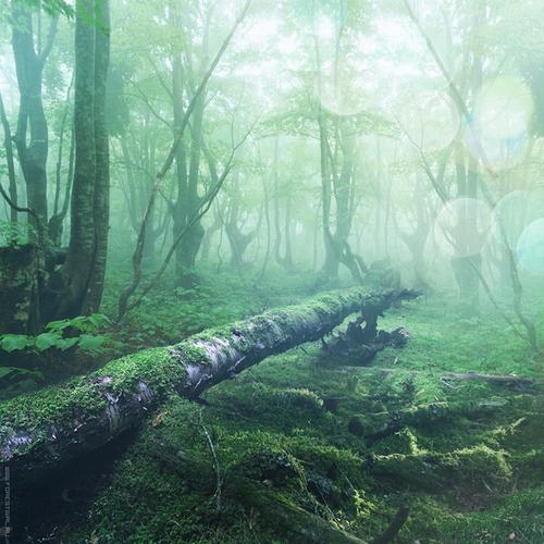 Oxigena la imagen con palabras estrelladas. Sweet_light_by_forestgirl-d3d9f77_large