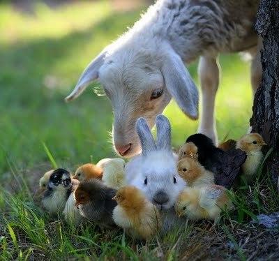 Baby+animals_large
