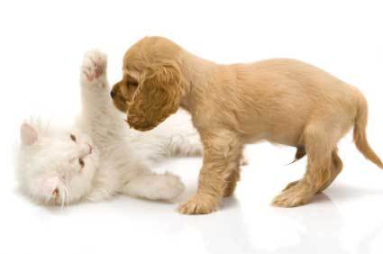 Puppy-and-kitten_large