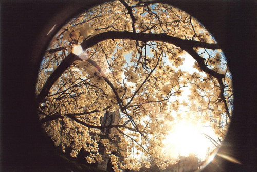 Lens,park,senses,photography,cute,four,seasons-b01ec6aeeb1edcd321787aa5f0d08f18_h_large
