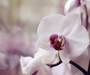 orchid photography flower