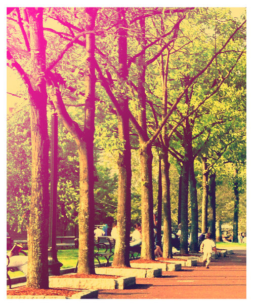 http://data.whicdn.com/images/8882228/Tree_Alley_by_chiffonshorts_large.jpg