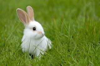 Mama-papa-quero-um-coelho-anao_large