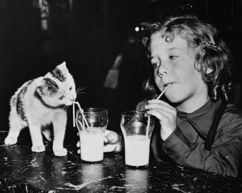  Piccsy :: Kitten trying to figure out how to use the straw, brooklyn, 1949