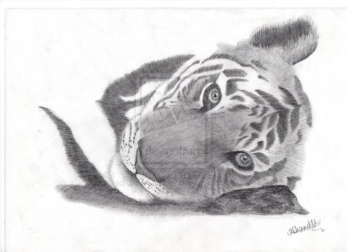 Tiger_by_jade_chandler-d3dzmzj_large