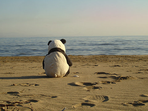 Lonely_panda_at_the_beach_large