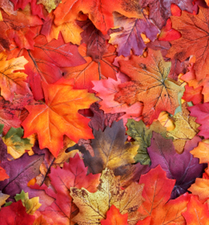 New clue that autumn leaf colours are defensive weapon | COSMOS magazine