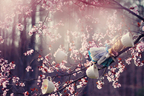 Artistic,alice,in,wonderland,color,concept,photography,flower-82e6e1db3dbe74bb299280102c15301b_h_large