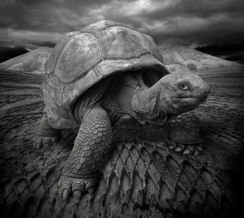 Turtle_large