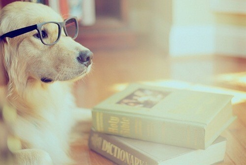 Books,cute,dog,funny,glasses,lol-bd363a1bce3313d67dc48e718c10c7ae_h_large