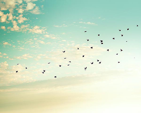 Group of birds flying ...